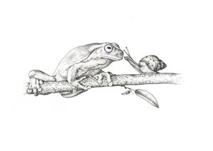 Frog and snail on a branch
