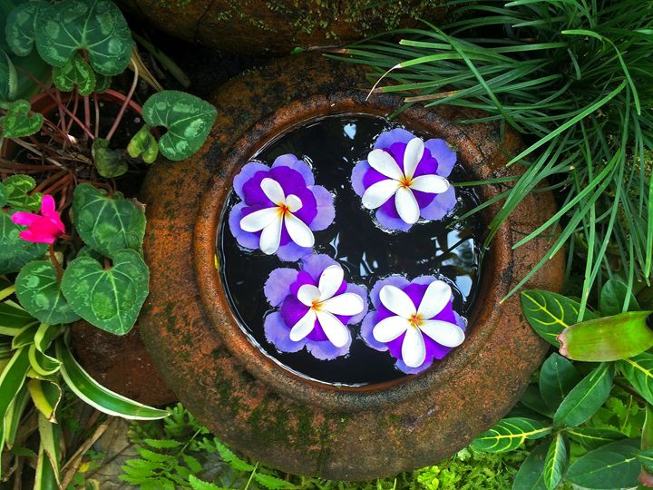 Thai gardens - amywanders
