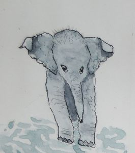 Baby Elephant walking in puddles