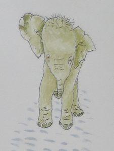Startled Baby Elephant