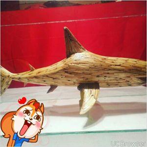 match stick shark