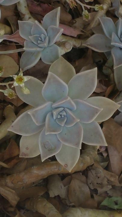 Cactus flower - Paintings