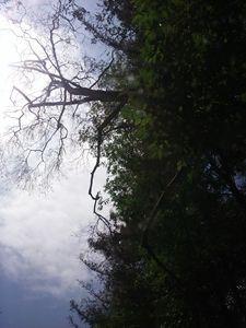 wild trees - jims art