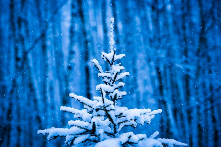 Snow Covered Chrismas Tree - digimatic