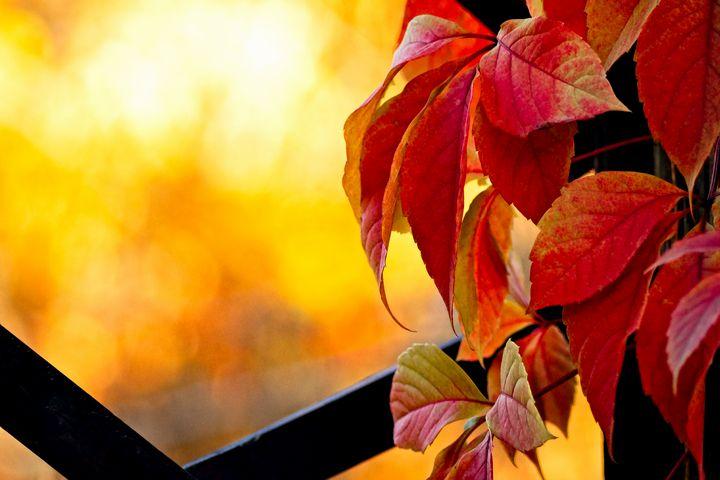 Autumn in the garden - digimatic