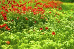Poppyflower V