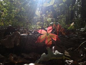 A leaf in the sun
