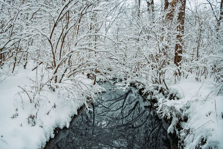 Snow Scene - Adam Lovelace Photography