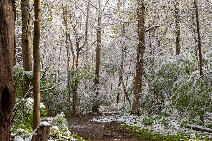 Spring Snow - Adam Lovelace Photography