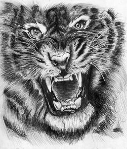 The Silver Tiger - Zoe C's Art