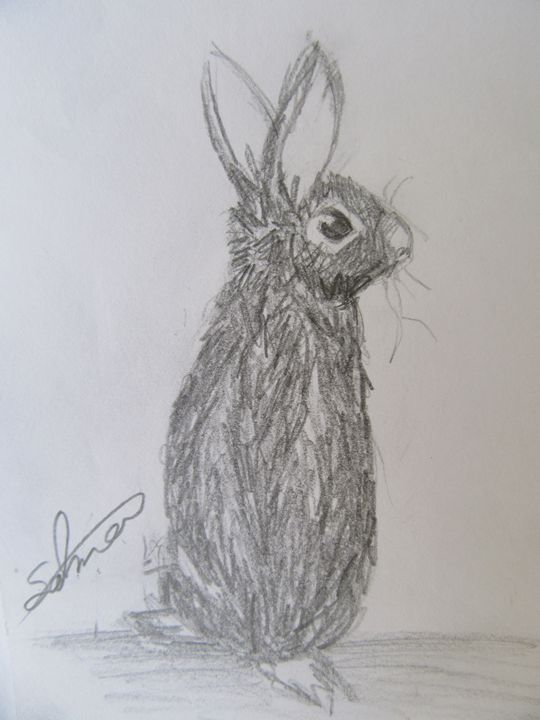 Mr Rabbit - Salma