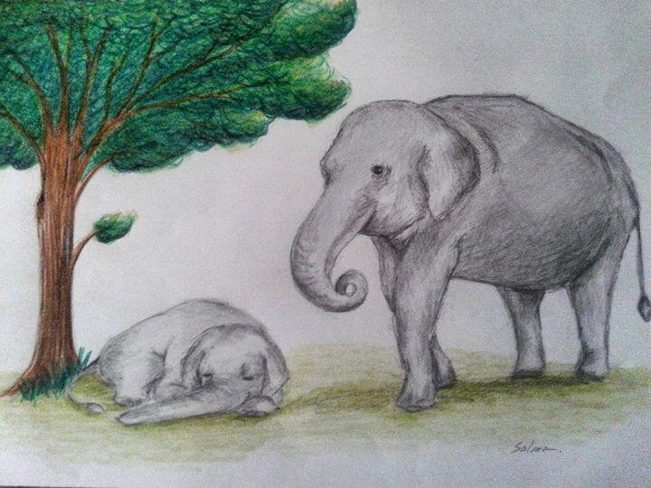 The baby elephant - Salma