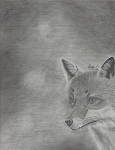 Red Fox Realistic Drawing - Sage C.