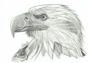 Realistic Eagle Drawing - Sage C.