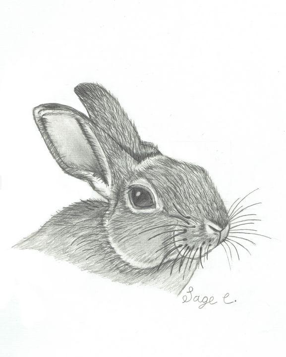 Bunny Rabbit Realistic Drawing Sage C Drawings Illustration Animals Birds Fish Rabbits Artpal