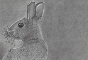 Realistic Bunny Drawing - Sage C.