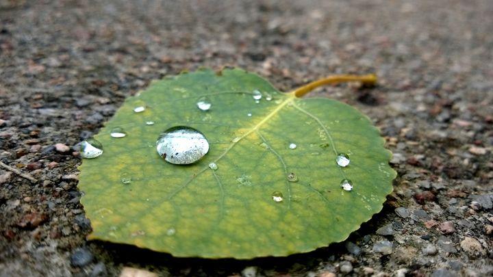 Dew Drop Leaf - Assassicactus