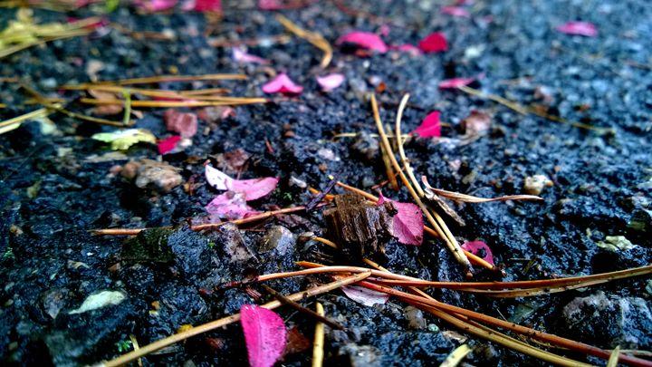 Pink Petals - Assassicactus