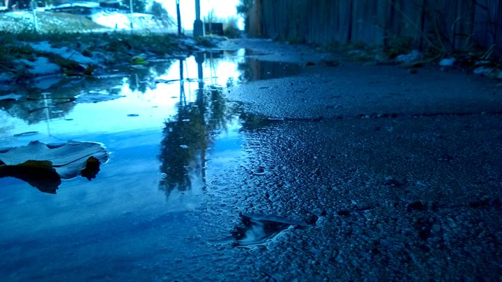 Sidewalk Tree Reflection - Assassicactus