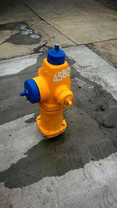 Blue and Yellow Hydrant - Assassicactus