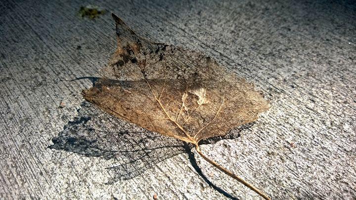 Shadowy Lacy Leaf - Assassicactus