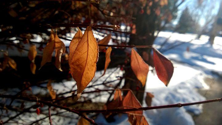 Close-Up Orange Leaf - Assassicactus