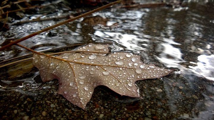 Leaf In Running Water - Assassicactus