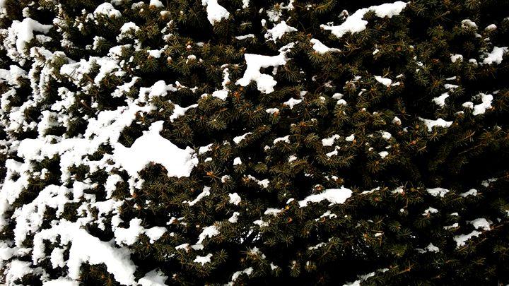 Snowy Pine - Assassicactus