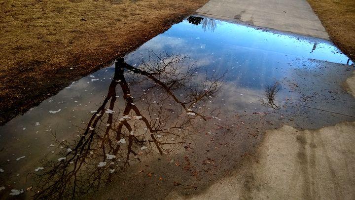Single Tree Reflection - Assassicactus