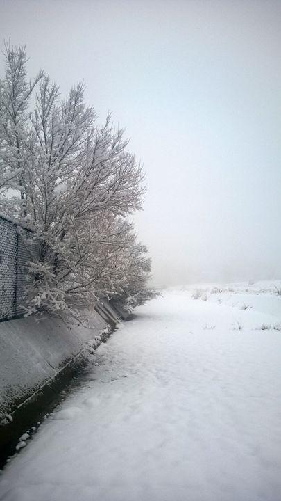 Wonderful Winter Scene - Assassicactus