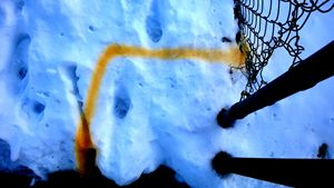 Yellow Snow Line