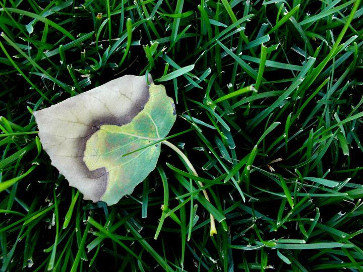Faded Leaf - Assassicactus