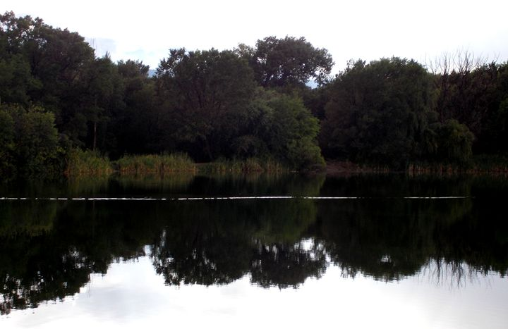 Tree Reflections - Assassicactus