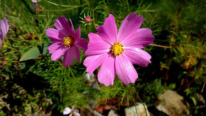 Shiny Pink Flowers - Assassicactus