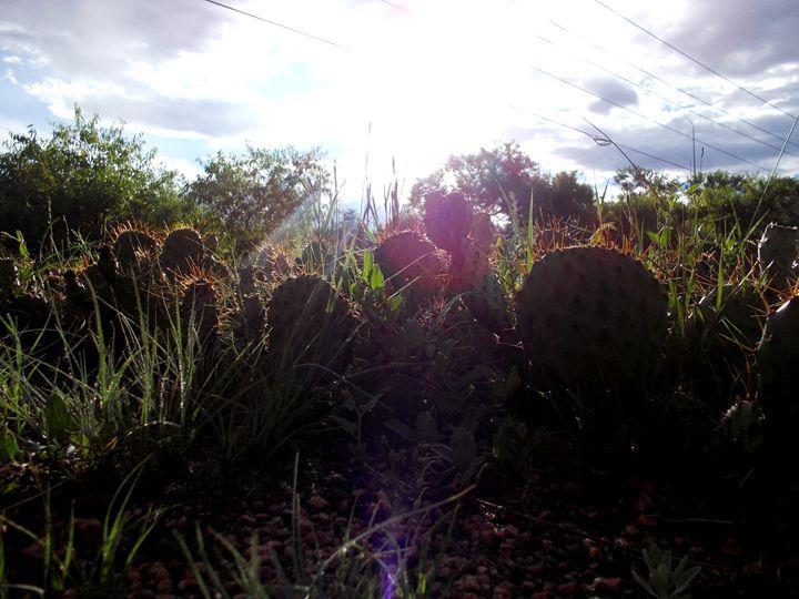 Sunny Cacti - Assassicactus