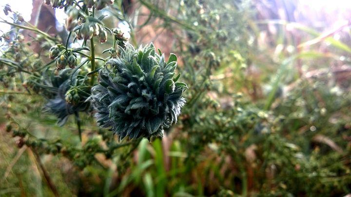 Tufty Flower - Assassicactus
