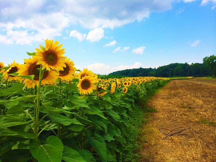 Sunflower Field - Artistic Decor