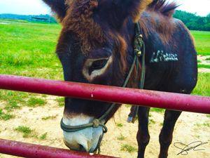 Donkey - Artistic Decor