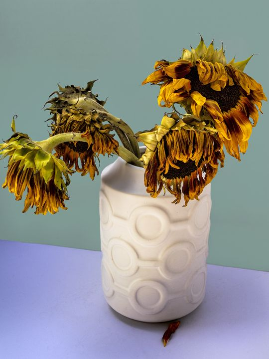 FOUR FADING SUNFLOWERS IN VASE - WDPS Gallery