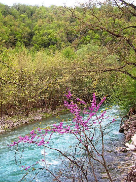 River - Pakokante