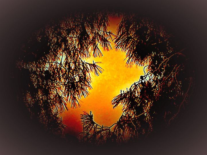 Bright window on the trees - Pakokante