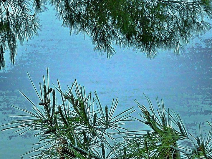 Sea to sea behind the pine - Pakokante