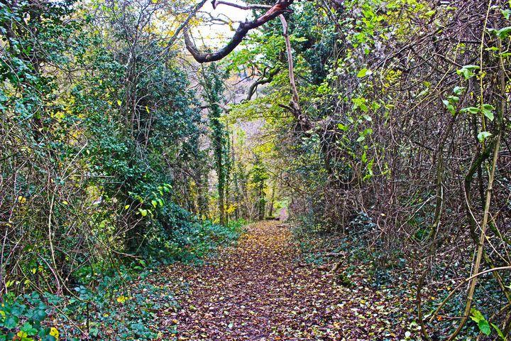 Welsh Woodland - Bex Art