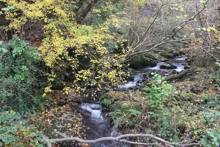 Welsh Woodland - Autumn - Bex Art