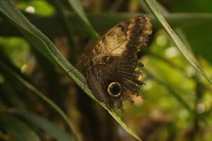 Butterfly Brown - Bex Art