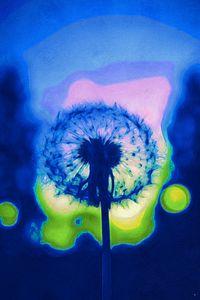 Psychadelic Dandeloin - Jill Rose