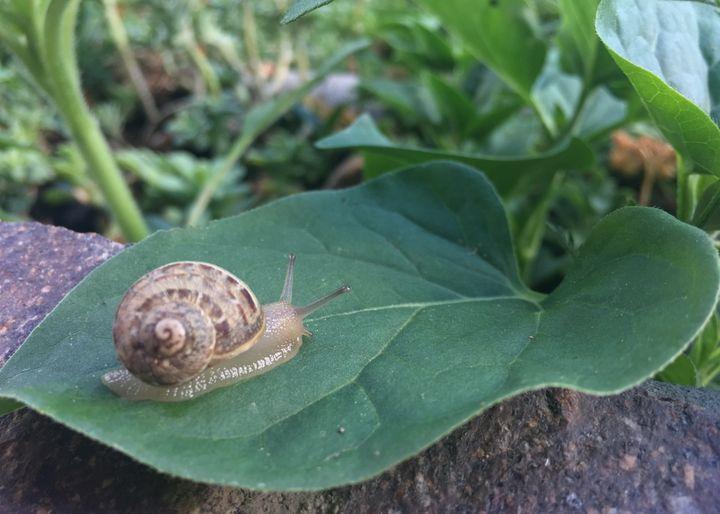 Snail - Pure Art