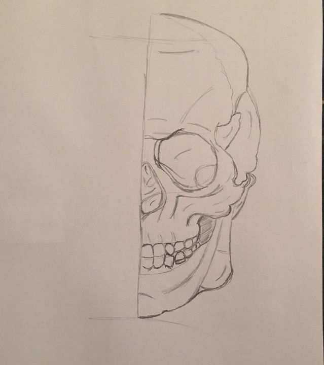 Skull sketch - Pure Art