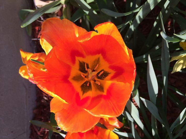 Orange Flower - GStack