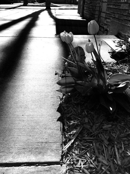 Black & White Day - GStack